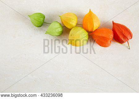 Rainbow Colors Chinese Lantern Plant On Pastel Background