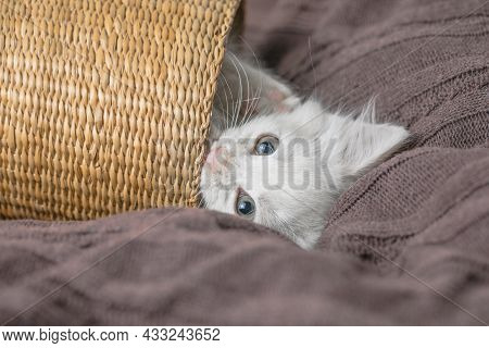 Small White  Striped Kitten Lying In Basket On Blanket. Concept Of Cute Adorable Pet Cat. Small Whit