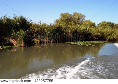 Willow Forest, A Common Landscape On The Banks Of The Dunavăț Canal.the Danube Canal In The Danube D