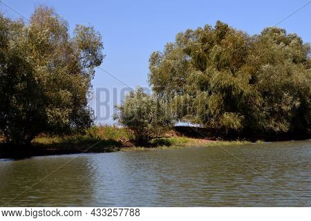 Old Willows On The Left Bank Of The Dunavăț Canal, Places Where Waterfowl Nest.