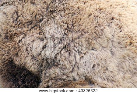 Brown Bear Fur