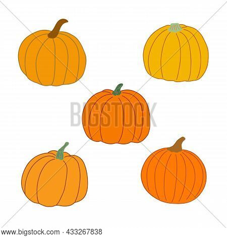Pumpkin Set Hand Drawn Vector Flat Style Vector Illustration In Bright Warm Colors, Vegetable For Se