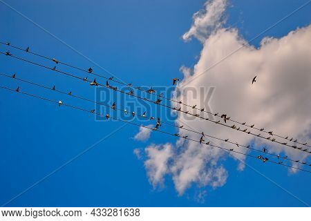 Flock Of Swallows On Blue Sky Background And Clouds On Wires.