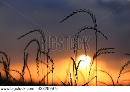 view on sunset through gry grass on meadow