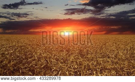 Landscape with sunset over crop field