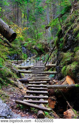 wooden steps of stairs in a gorge in a mountain forest. Take it in Slovakia mountains
