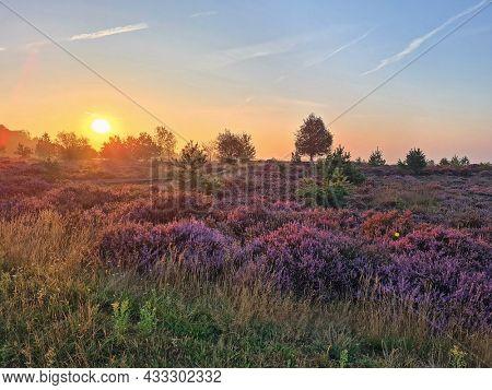 Sunrise in the National Park De Hoge Veluwe in the Netherlands