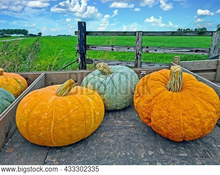 Pumpkins on a wooden cart in the countryside from the Netherlands
