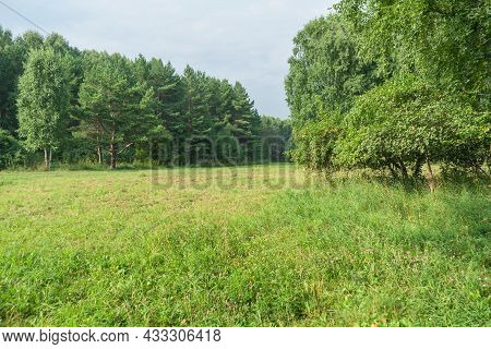 Summer Glade View In Park Of Russia