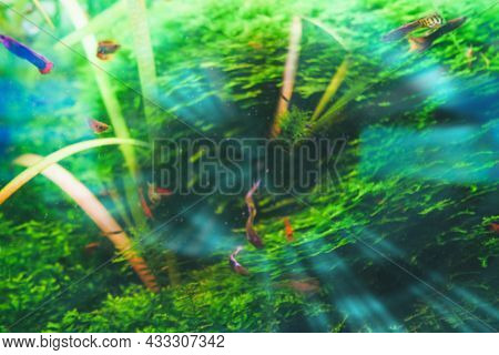 Abstarct Conceptual Image Of Gulping Creature Undersea With Black Hole Swallowing Nearby Fishes Imit