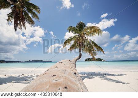 Palm Tree On White Sand Beach. Idyllic Day In Tropical Travel Destination. Praslin Island, Seychelle