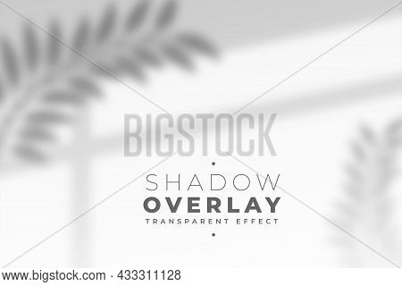Leaves And Window Pane Shadow Overlay Effect Vector Design Illustration