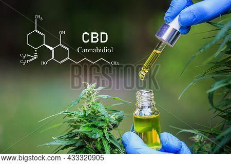 Cbd Composition, Cellular Glass Vial Containing Hemp Oil With Cannabis Plants. Cbd Hemp Oil Products