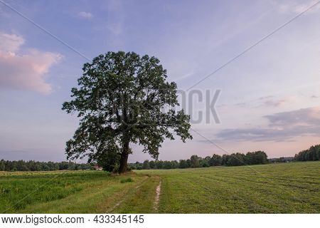 Meadows In A Vast Plain. A Lonely Tall, Deciduous Tree. The Meadow Is Covered With Green Grass. Ther
