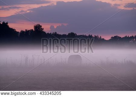 Meadows In A Vast Plain. A Lonely Tall, Deciduous Tree. The Meadow Is Covered With Green Grass. The