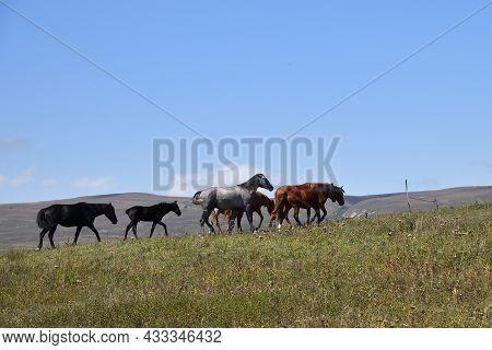 Horse Herd. Chechnya,  Russia