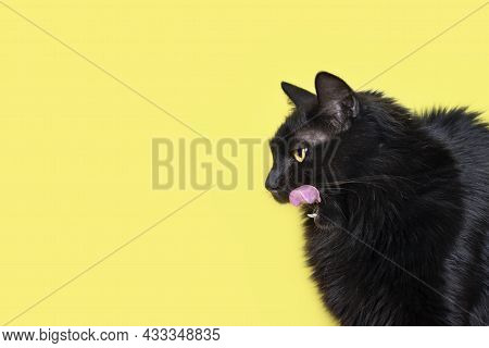 Black Fluffy Cat Licking His Lips. Lovely Fluffy Cat Licking Lips. Copy Space For Text.