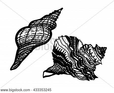 Set Of Black And White Ornate Hand Drawn Seashell Of Freehand Ink Style Isolated On White. Amazing I