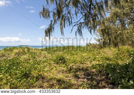Low Angle View Of Native Sand Vegetation Framed By Fir Trees And With The Ocean And An Island Beyond