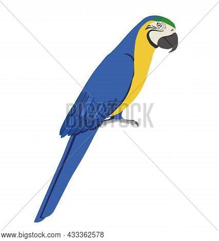 Ara Ararauna - Blue And Yellow Macaw - Side View - Flat Vector Isolated