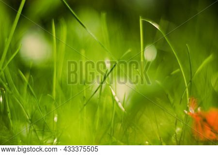 Natural Green Bokeh Of Grass, Blurred Out Of Focus Background. Dark Summer Sunlight Defocus From Law