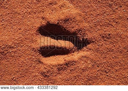 Hoof imprint of an African antelope in soft sand