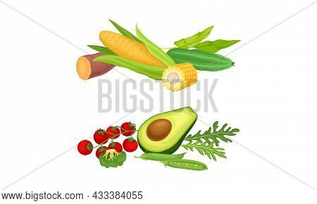 Cultivated Garden Vegetable With Avocado And Corn Cob As Raw Eco Nutrition Vector Set