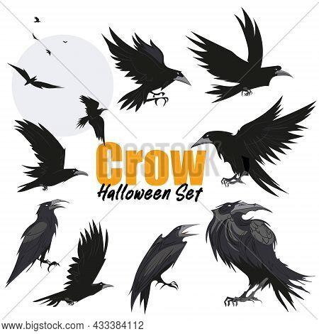 Set Of Black Raven Bird In Different Poses Cartoon Crow Design Flat Vector Animal Illustration Isola
