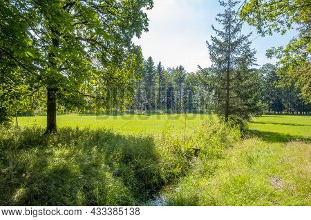 Sunny Scenery Around The Edge Of The Woods At Summer Time