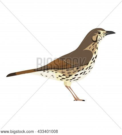 Turdus Philomelos - Song Thrush - Side View - Flat Vector Isolated