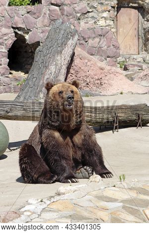 The Bear Is Sitting In The Zoo Is Enclosure.