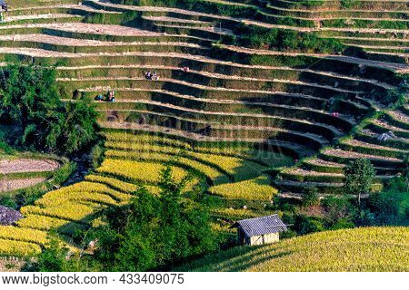 Landscape View Of Rice Fields In Mu Cang Chai District, Vietnam