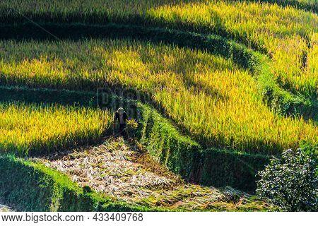 Self-sufficient Labor-intensive Farming In Vietnam