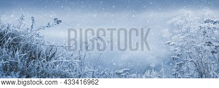 Winter Fairytale Background With Frost-covered Plants During A Snowfall. Christmas And New Year Back