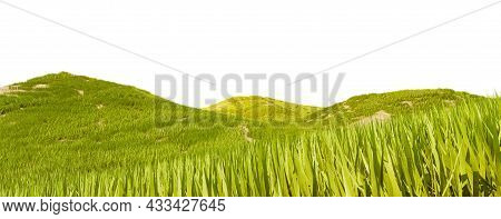 Green Grass Field Isolated On A White Background, 3d Rendering. Grass Texture For The Background, 3d