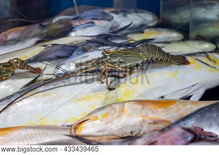 Delicious Raw Fishes In The Seafood Market