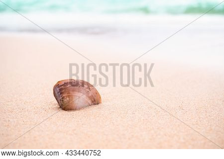 Sea Shell On Sand Beach At Coast With Blue Sea Blur Background. Ocean Pattaya Thailand On Day.