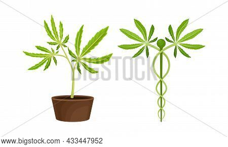 Cannabis Plant Growing In Pot With Serrate Leaflet As Cultivar For Medical Use Vector Set