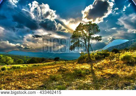 Tree in rural landscape. Beautiful nature scene. 3D rendering