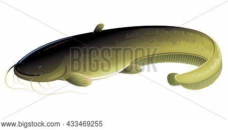 Wels Catfish Realistic Big Freshwater Fish Isolated Illustration