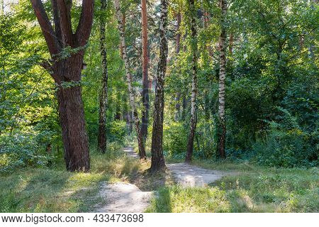 Fragment Of The Mixed Deciduous And Coniferous Forest With Footpath Among The Trees At Summer Day