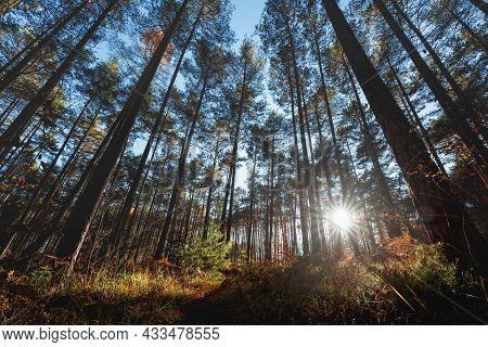 Last Sun Shining Trough The Alpine Pine Forest During Autumn, Tirol, Austria