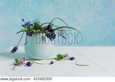 Spring Blue Flower Arrangement. Muscari In A Vase On A Bluish Turquoise Background. The Concept Of M