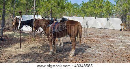 A Civil War Era cavalry camp at a reenactment. poster