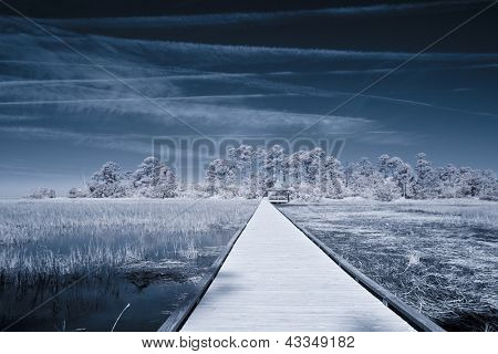 infrared picture of path over water leading to forest