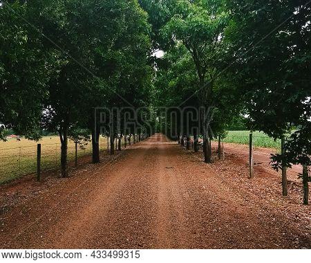 O Caminho De Terra Com Belezas Do Interior