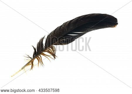 Black And Brown Feathers Of A Rooster On A White Isolated Background