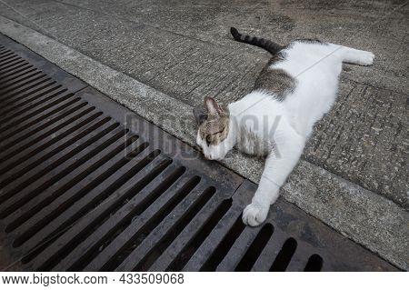 Stray Cat Lying On The Pedestrian Walkway In Fishing Village Tai O In Hong Kong