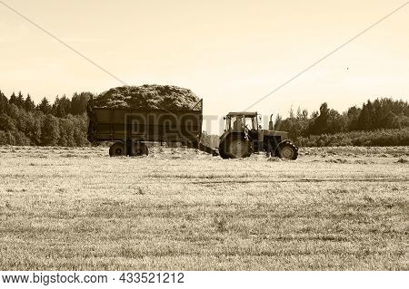 Tractor With A Trailer Filled With Freshly Cut Grass. Hay Making, Grassland. General Plan, Panorama.