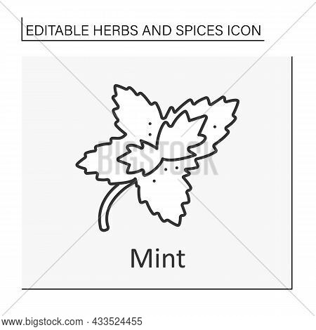Mint Line Icon. Aromatic Herb. Chilling Plant For Tea, Hard Drinks And Medicine. Herbs And Concept.